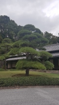 Imperial palace Tokyo (2)